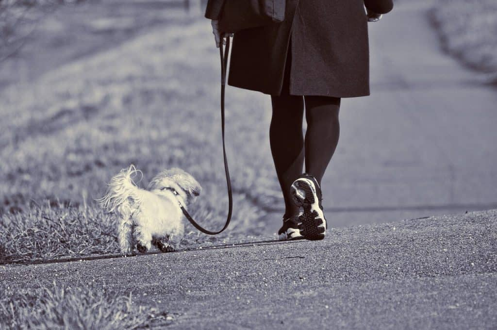 Walk a dog for health and dollars
