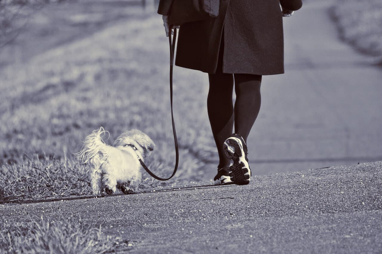 Walk Dog for Health and Money