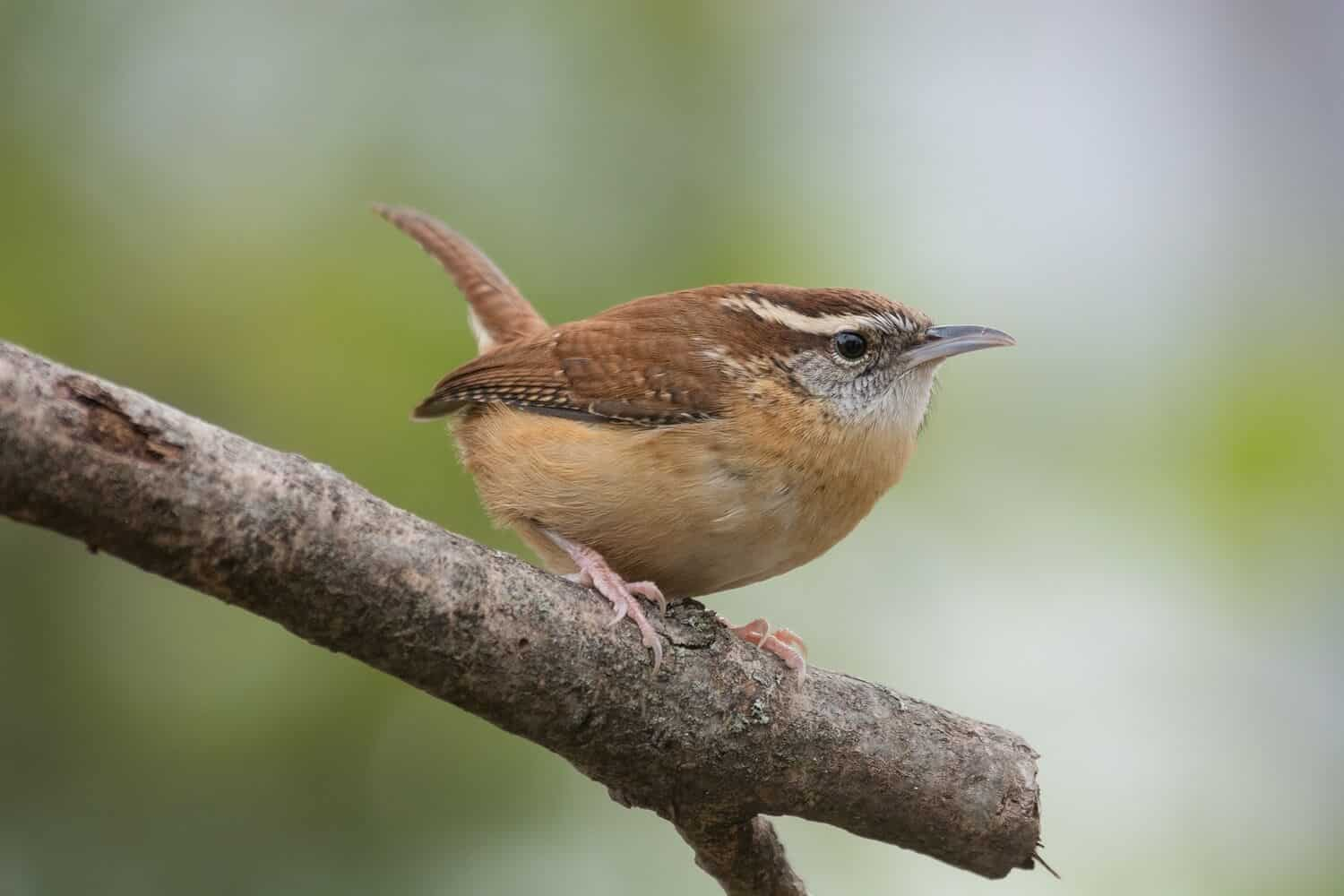 Home and Garden Improvements That Will Benefit Local Wildlife