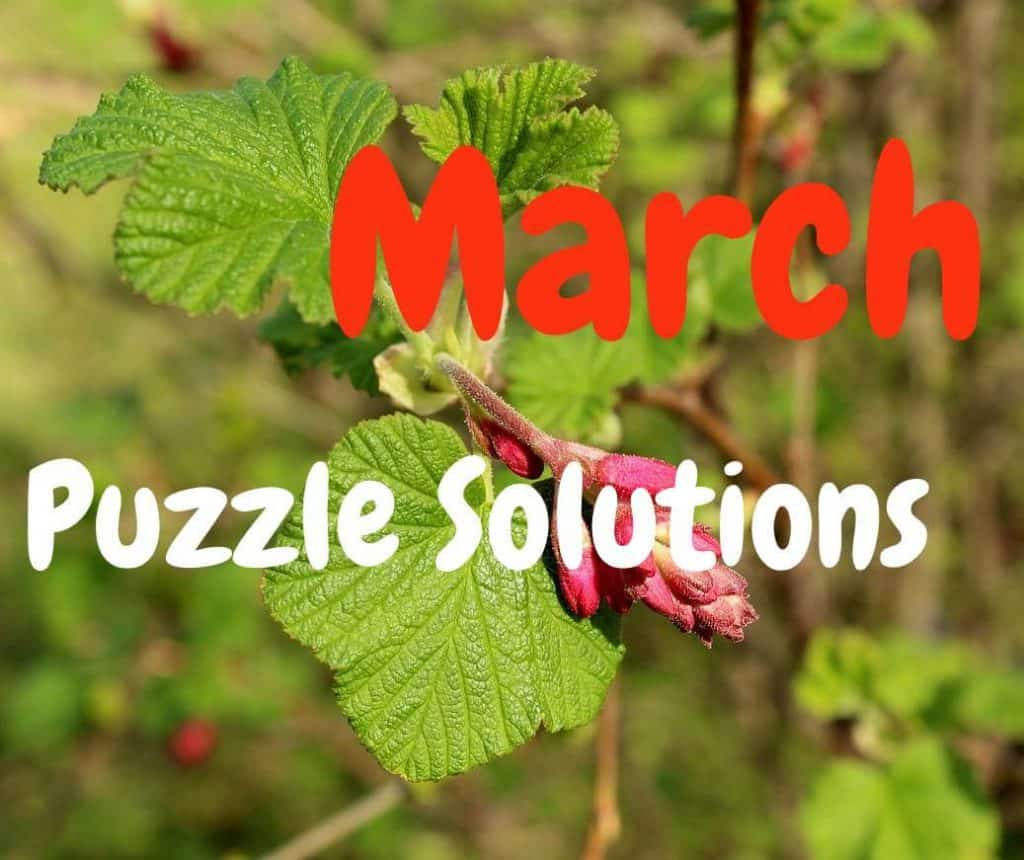 March 2019 Dimple Times Newspaper Puzzle Solutions