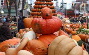 Pumpkin Show 2012 - Pumpkin Display on North Court Street