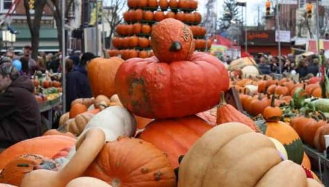 Pumpkin Show 2012 - Pumpkin Display on North Court Street