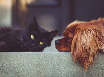 dog cat pickaway county