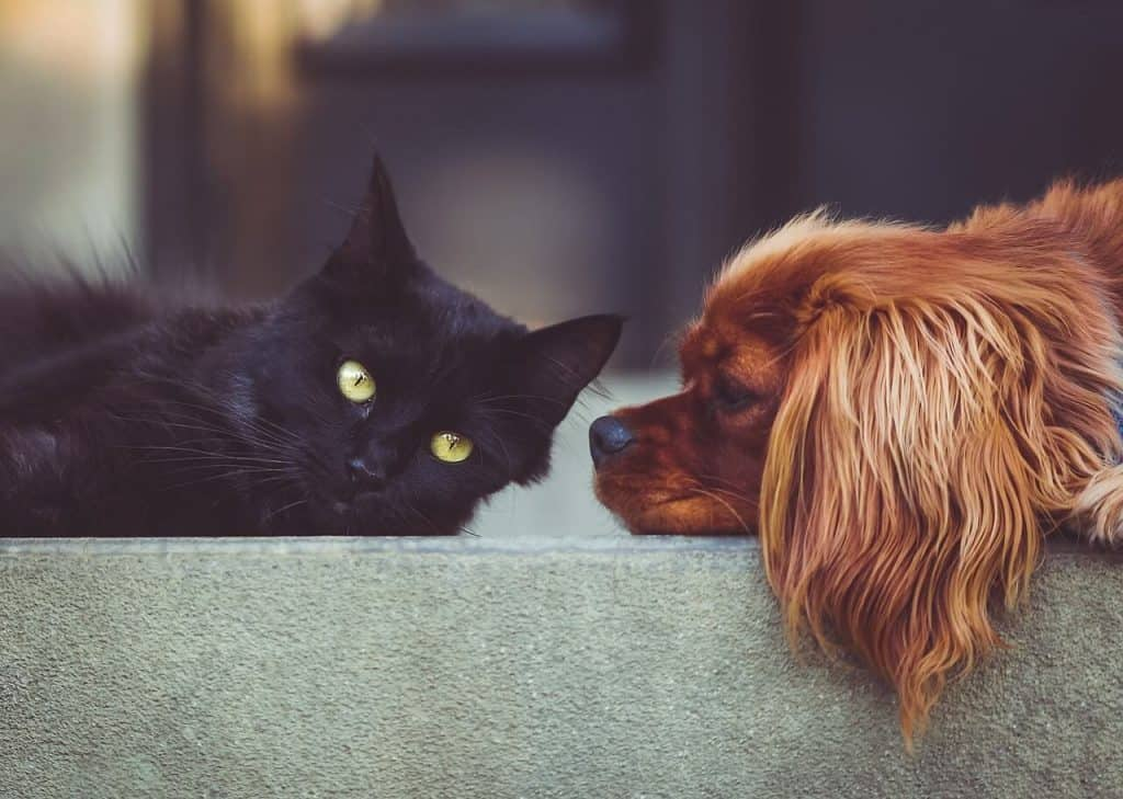 Top 5 Hot Items for Pets