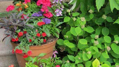 perennials and annuals