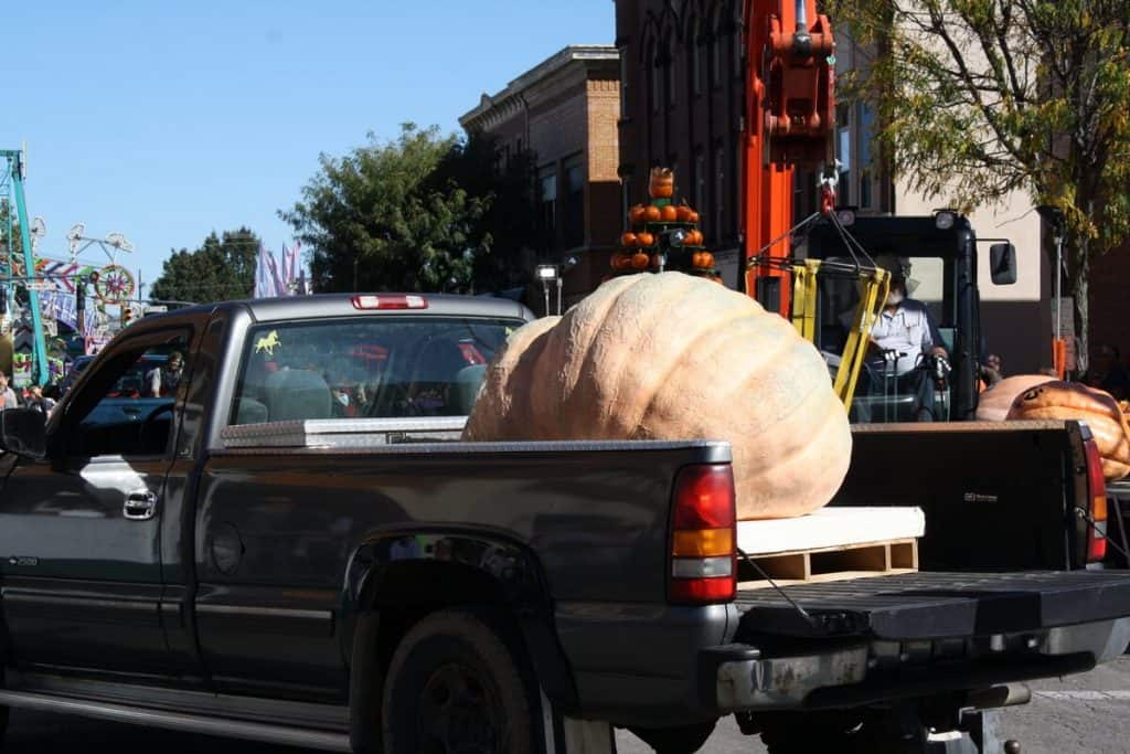 Giant pumpkin weigh in