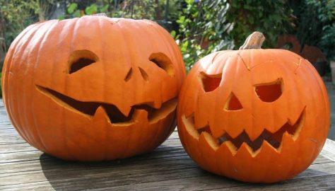 Spooky Plants Pumpkins and more