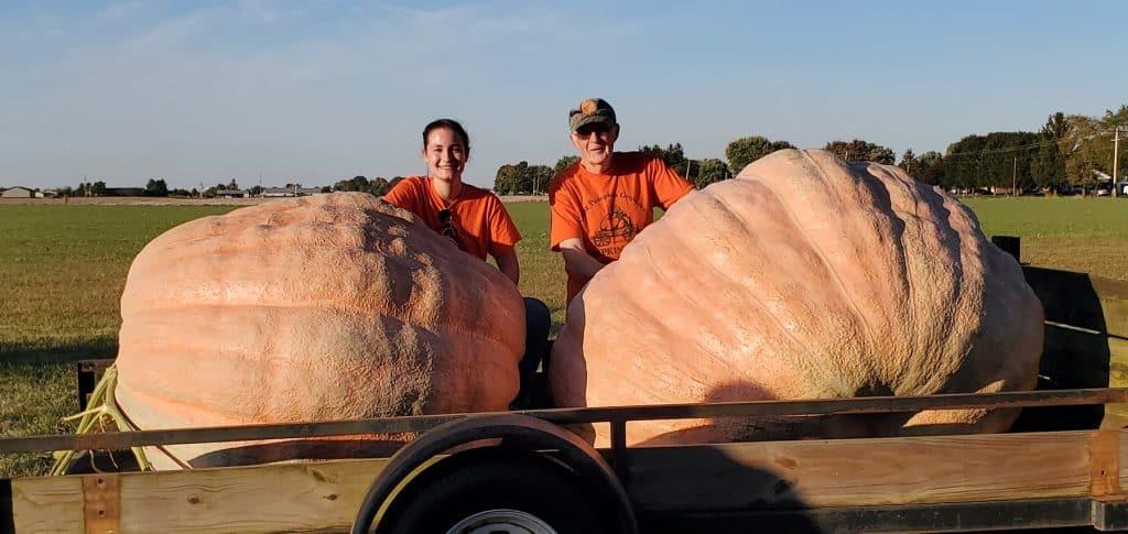 Liggett's Pumpkins are ready for Pumpkin Show pumpkin weigh-off