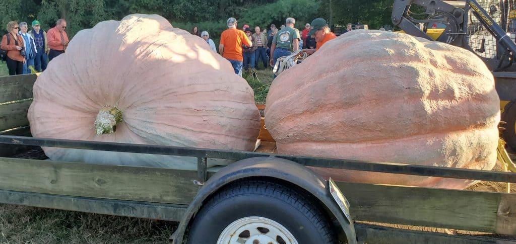 Bob and Bella Liggett's Giant Pumpkins