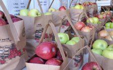 Laurelville Fruit Farm - Apples