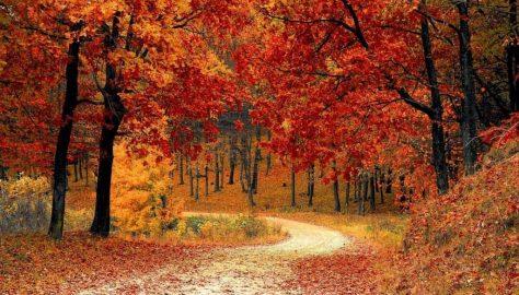 Outdoor fall autumn activities