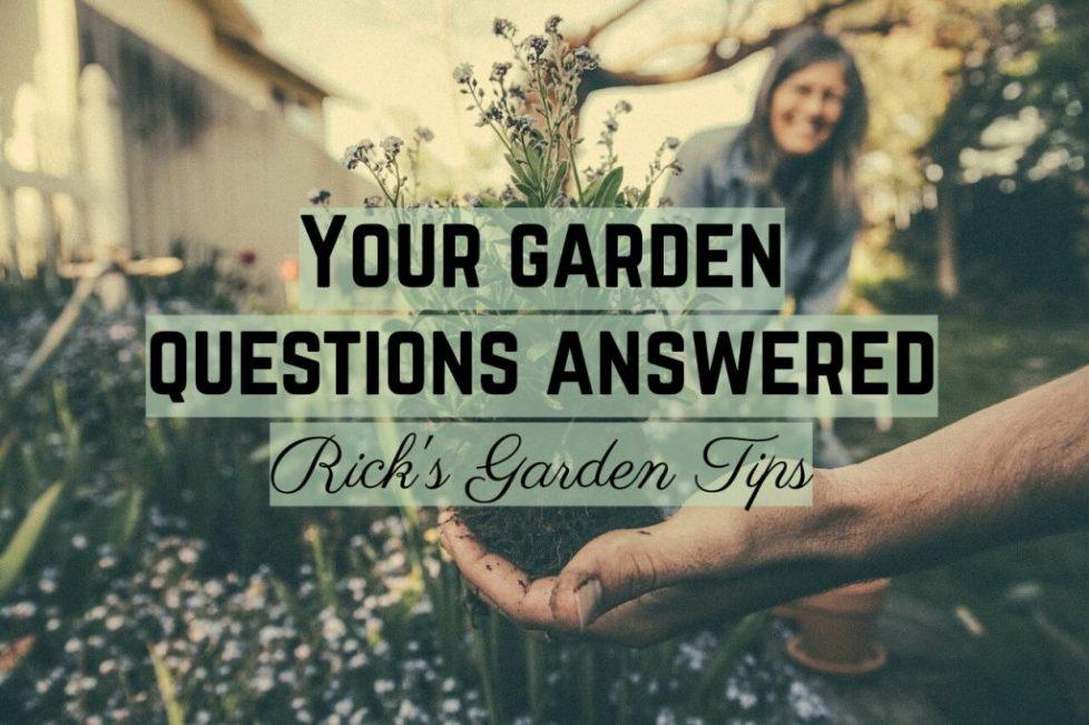 Garden questions planting