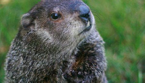 3 Ideas for Groundhog Day Fun