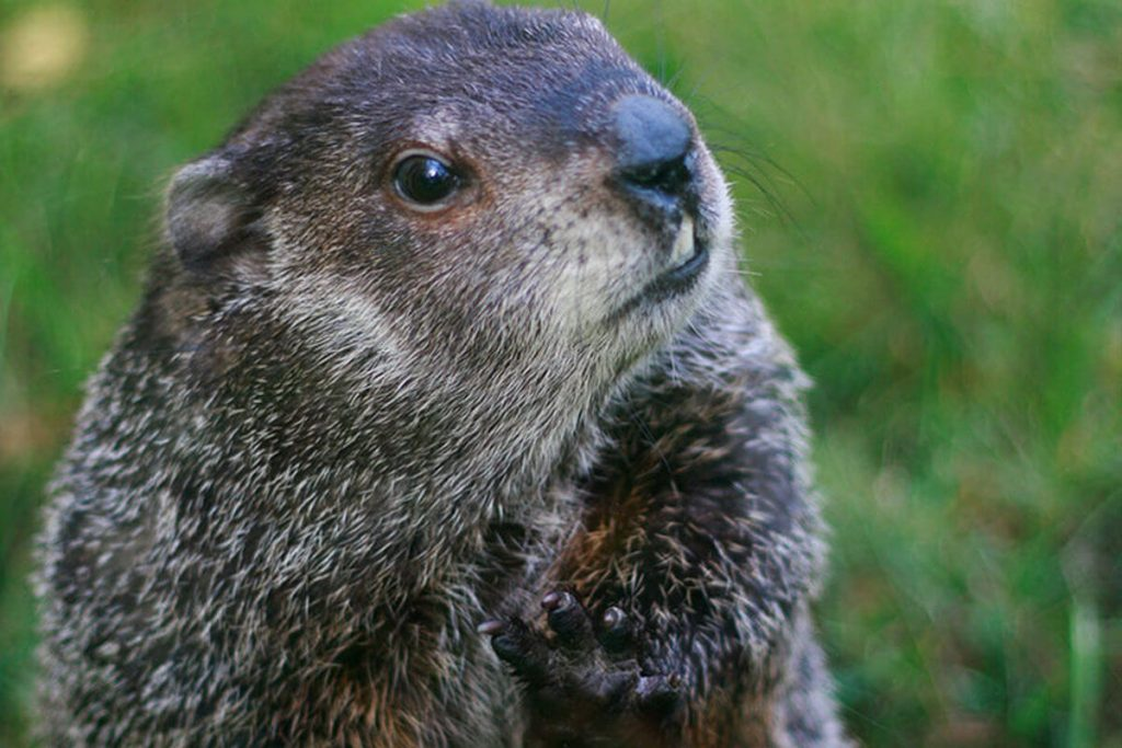3 Ideas for Groundhog Day Fun
