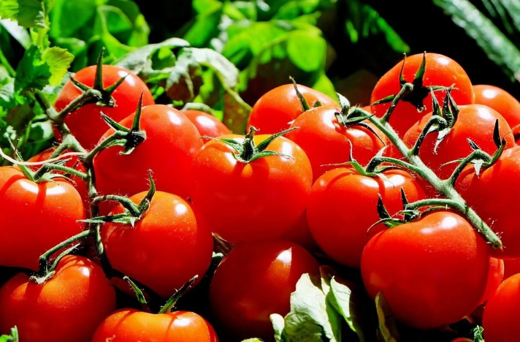 The Tomato, red, ripe, and luscious!