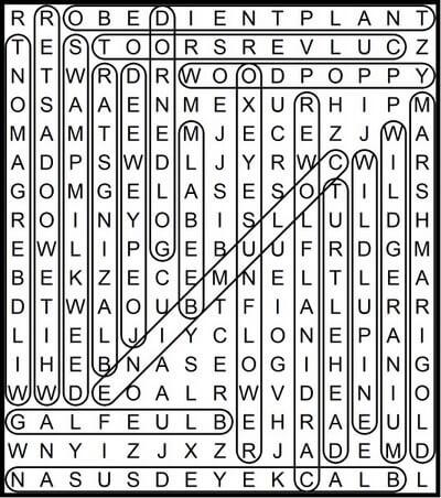 Ohio native perennials word search April 24 2020