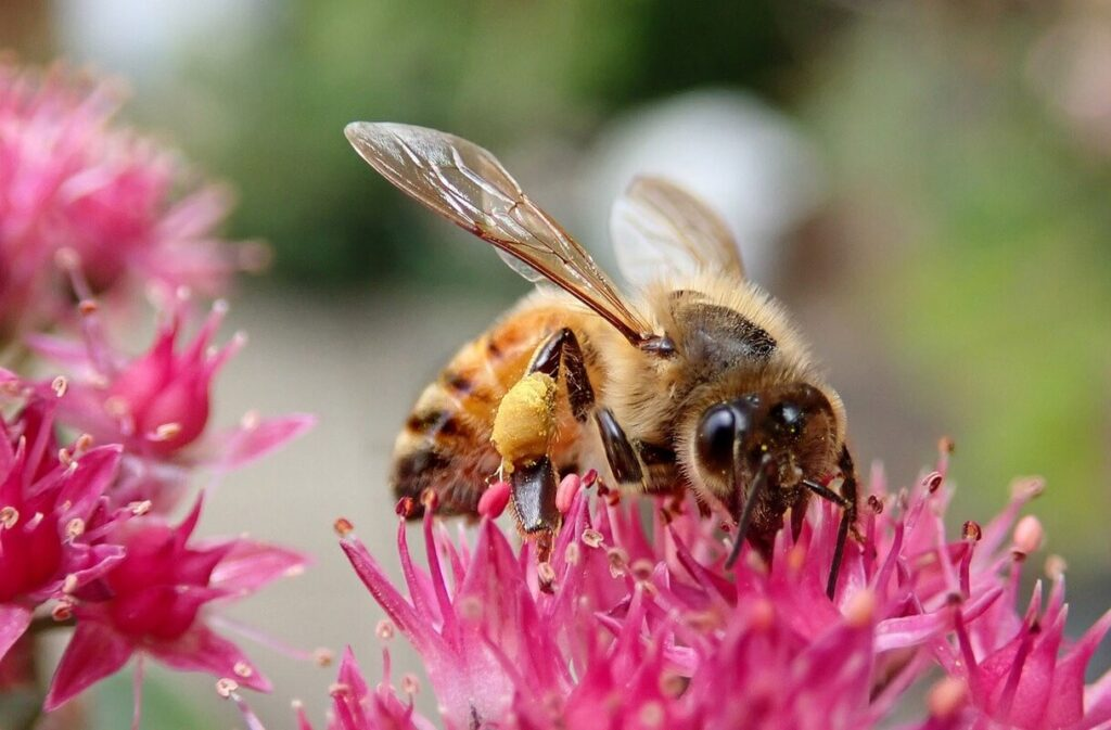 Top garden choices that are bee-friendly