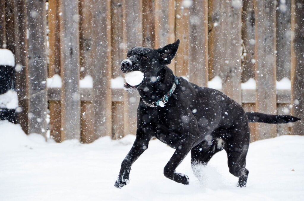 Winter essentials for your dog