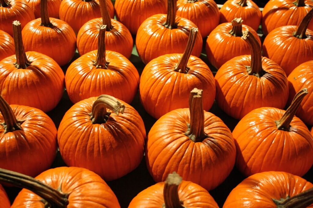 Three ways to add nutritious pumpkin power to your diet