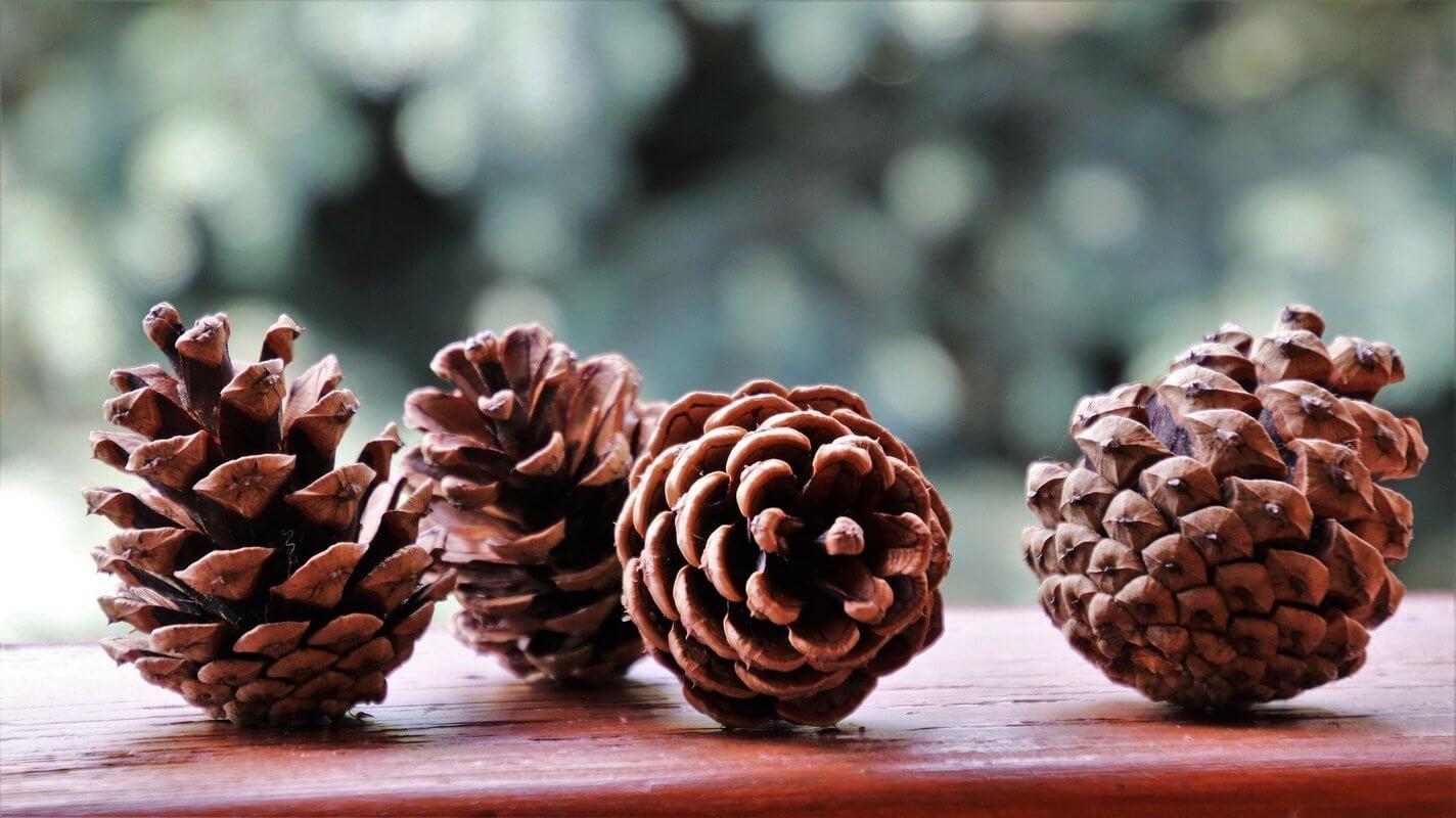 How do I use pine cones as Christmas decorations