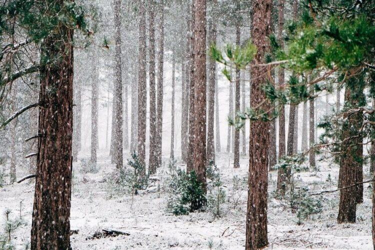Tree Snowing - Christine's Corner