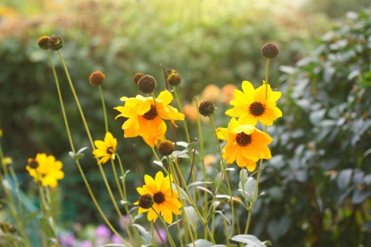 Hold Onto Hope Flowers