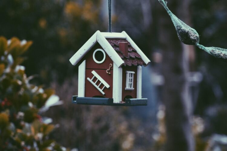 Buying and Selling in a Hot Housing Market