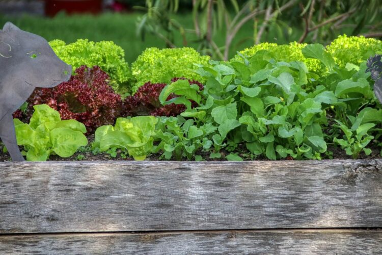 Could raised container gardening be for you