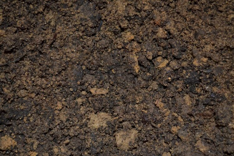 What is the best kind of soil to grow a beautiful garden