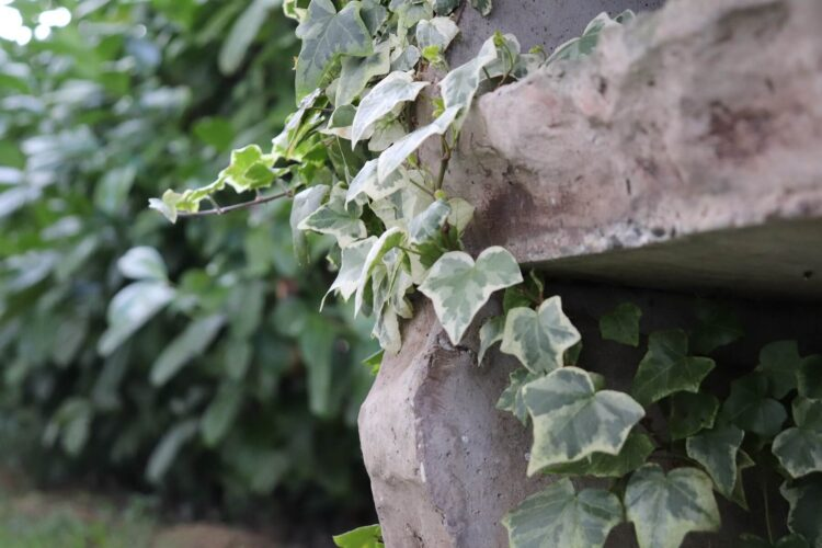 Keep these invasive plants out of your garden