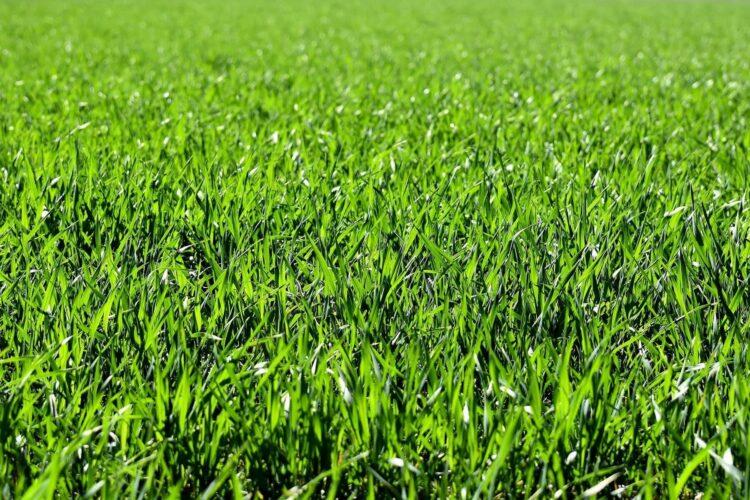 Summer gardening, grass tips